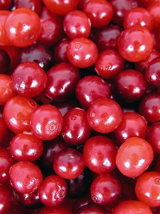 Cranberries for Bladder Health